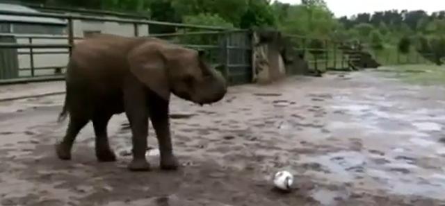 neli-slonica